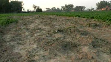 Photo of ১১ কোটি শতক পতিত জমি চাষাবাদে আসছে