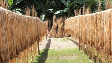 Photo of পাটের ন্যায্যমূল্য নিশ্চিতে সরকার সচেষ্ট