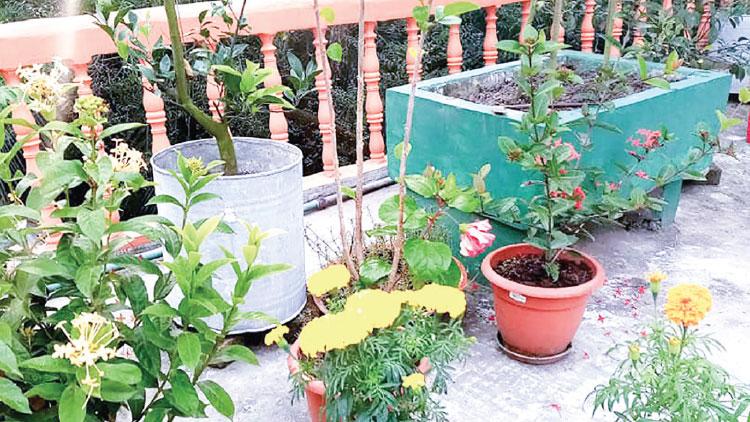 বান্দরবানে জনপ্রিয় হচ্ছে ছাদবাগান