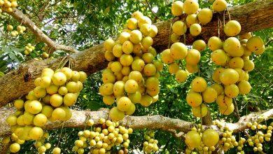 লটকনে স্বাবলম্বী নরসিংদীর চাষিরা